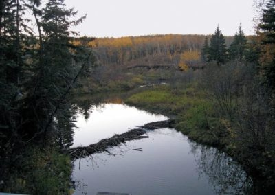 Whitemud Ravine Nature Reserve